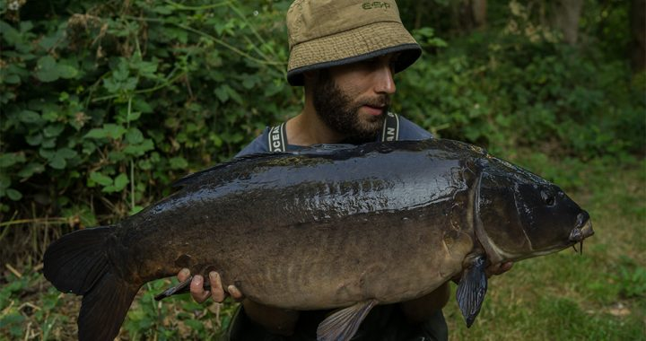 A special carp...